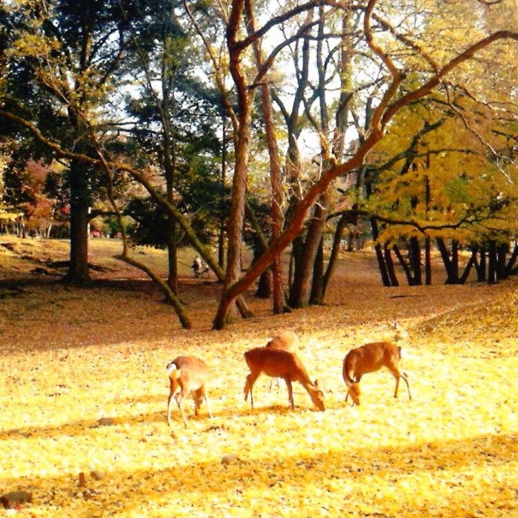 奈良公園の桜・紅葉