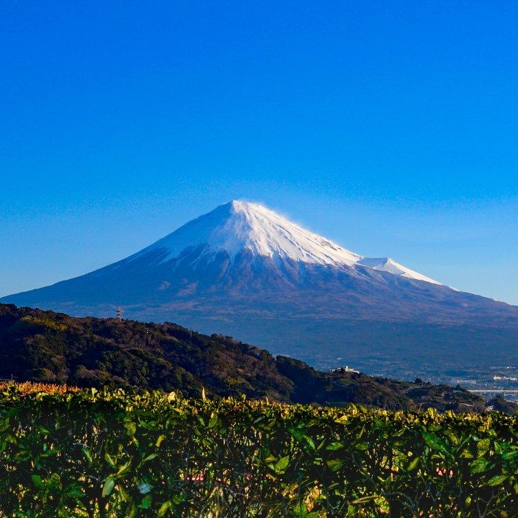 富士川サービスエリア(下り)