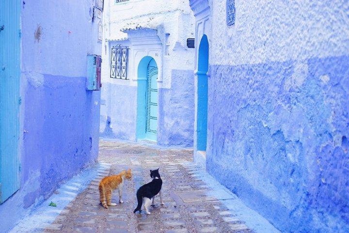 魅惑の国モロッコでやりたいこと...