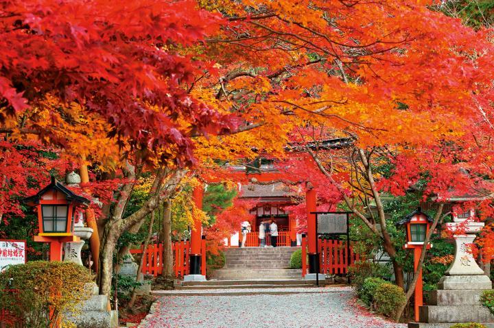 紅葉の色に深い歴史を感じながら参道をゆく「大原野神社」